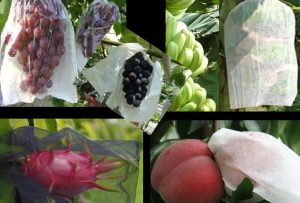 A-3) Fruit Bags on Trees